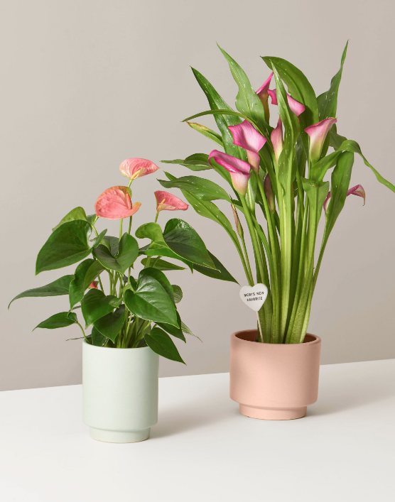 picture-of-mothers-day-plants-photo.png