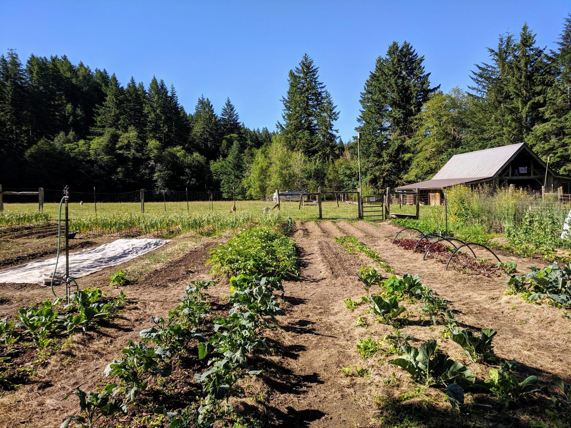 mgf-farm.jpg