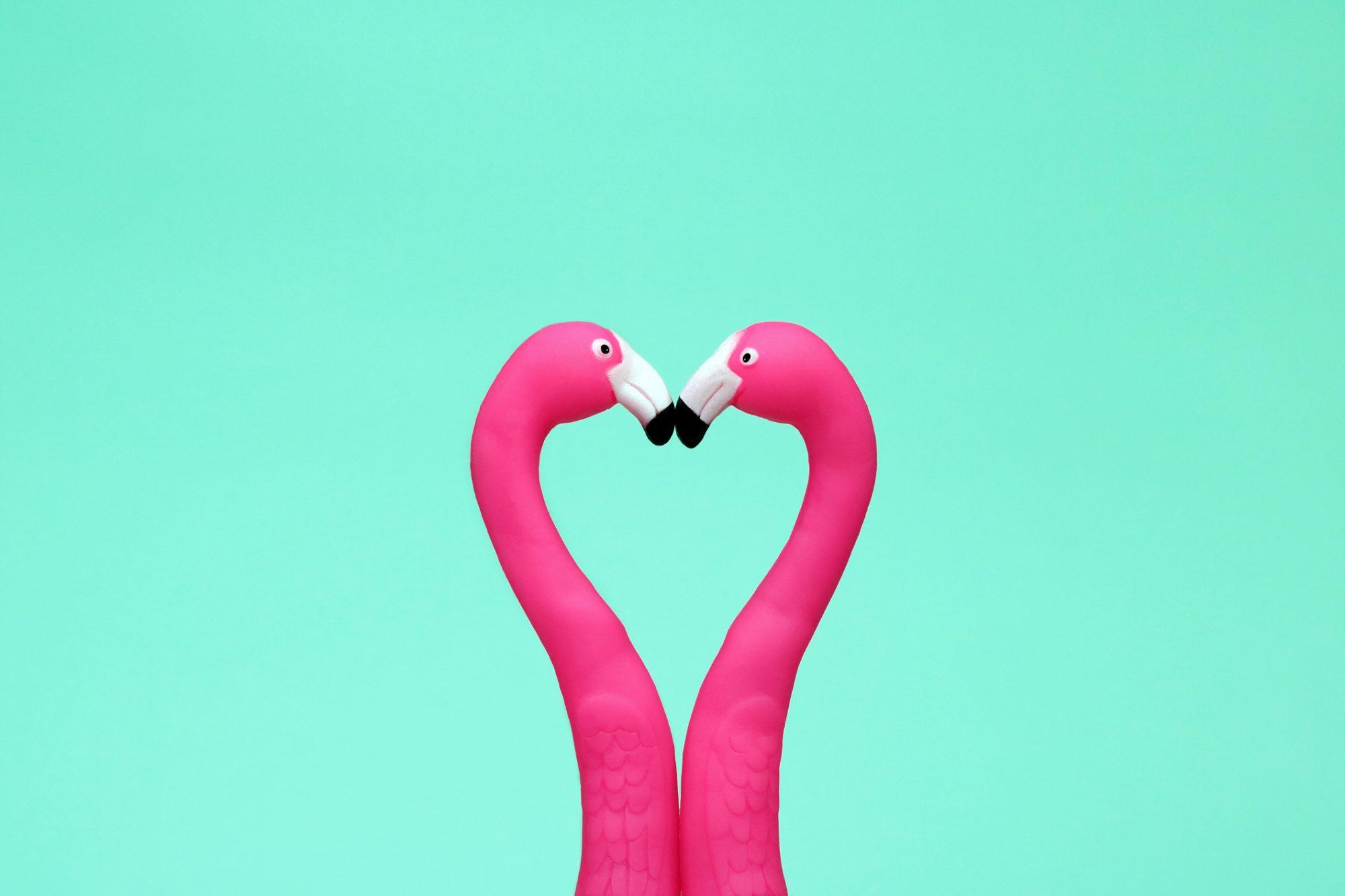 two flamingos kissing making heart shape