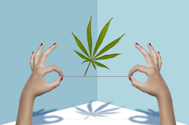 Hands holding up a marijuana leaf