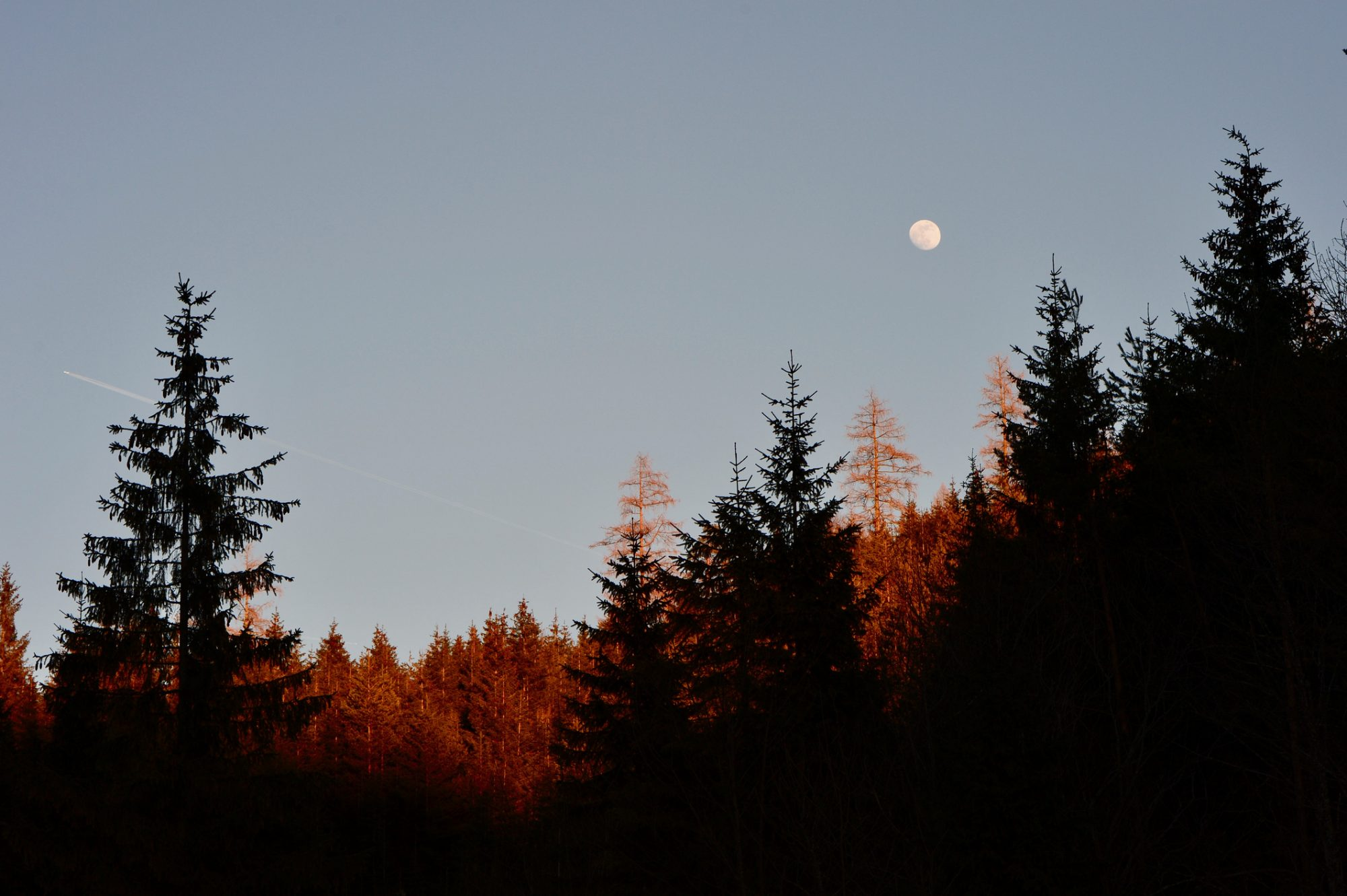 Low Angle View Of Silhouette Trees And Full Moon Against Sky During Autumn