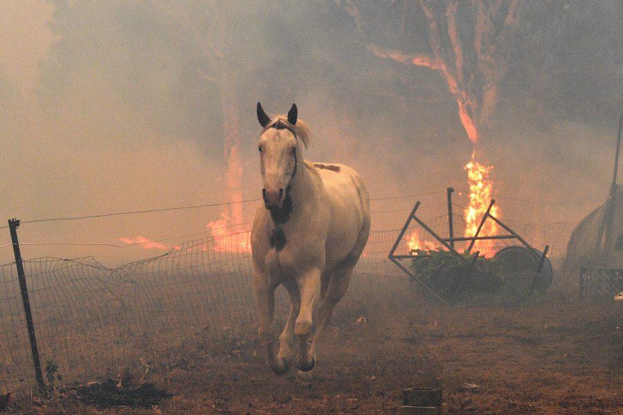 How to help Australia Wild Fires
