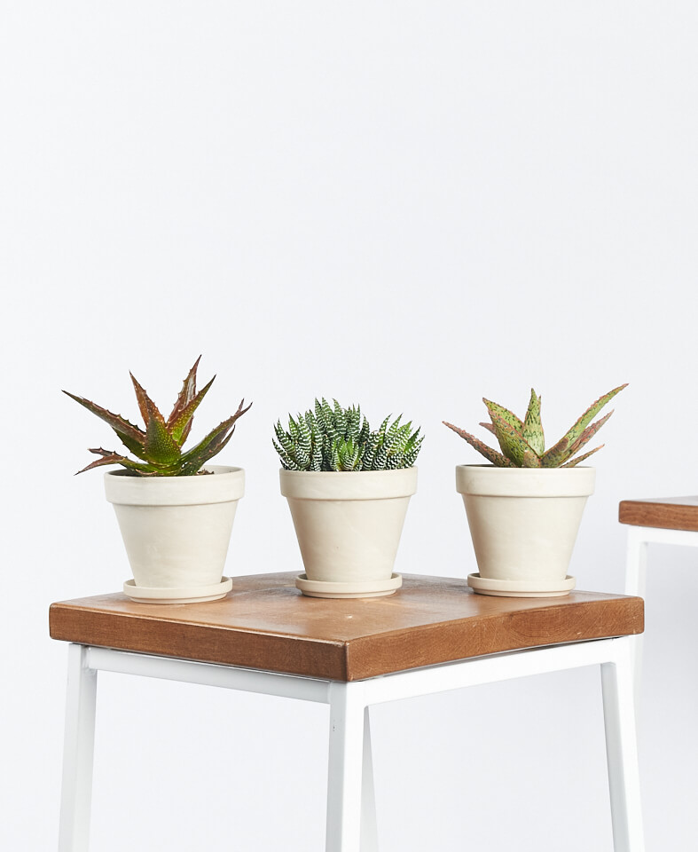 bloomscape succulent trio, mothers day gifts