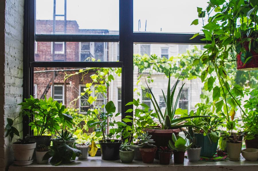 plants-in-windowsill.jpg