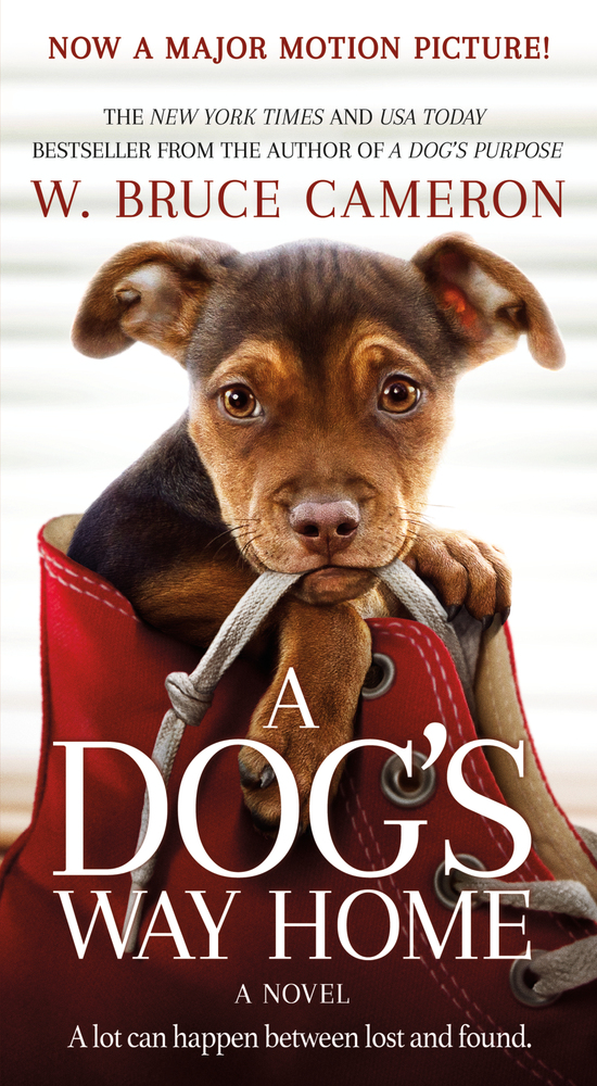 picture-of-a-dogs-way-home-book-photo