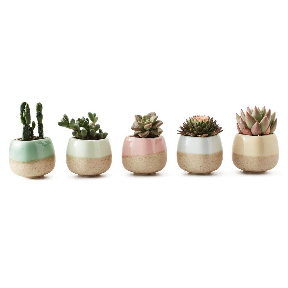 picture-of-succulent-planters-photo