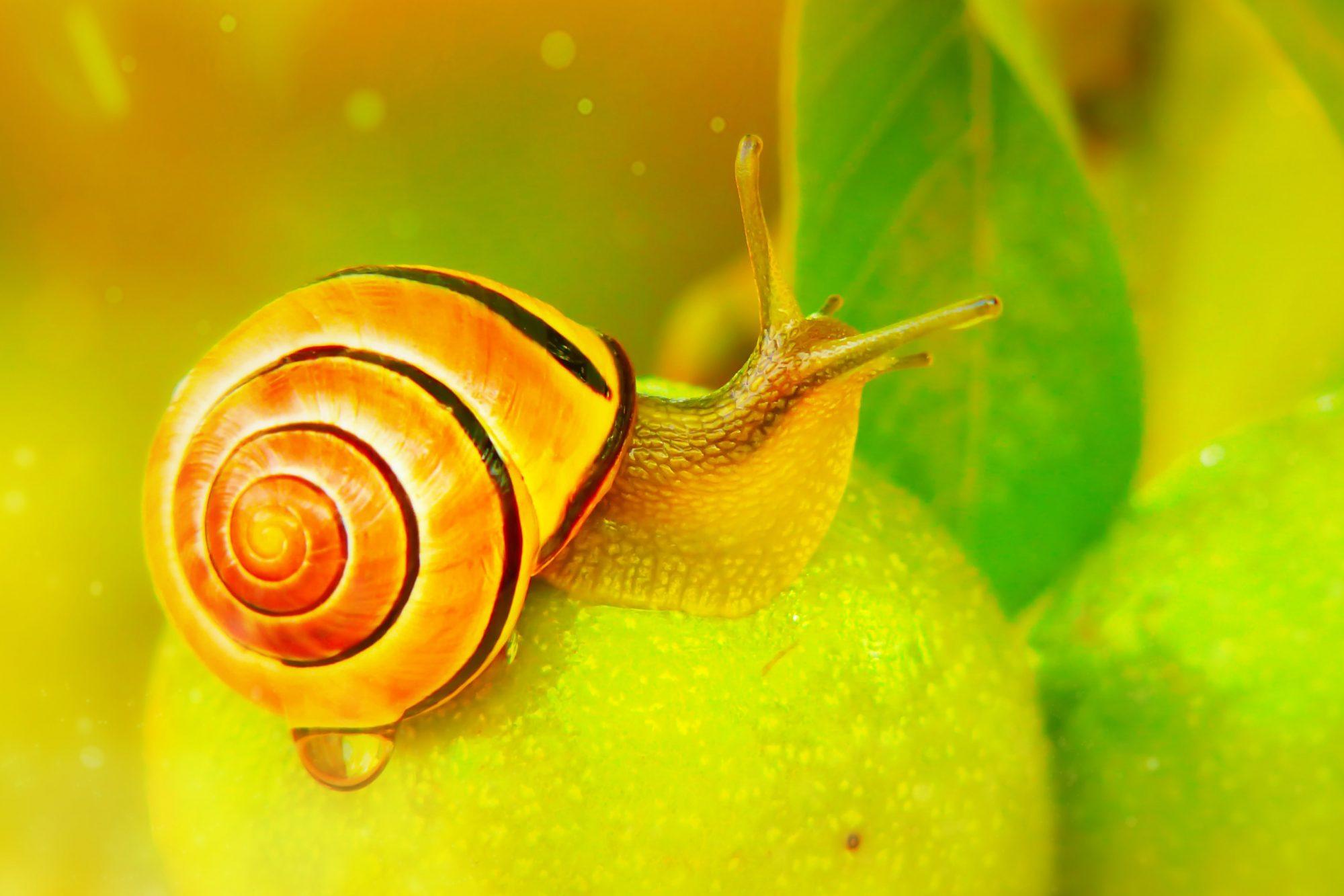 snail facial at home