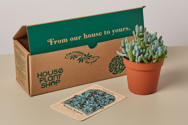 houseplant subscription hobby gifts