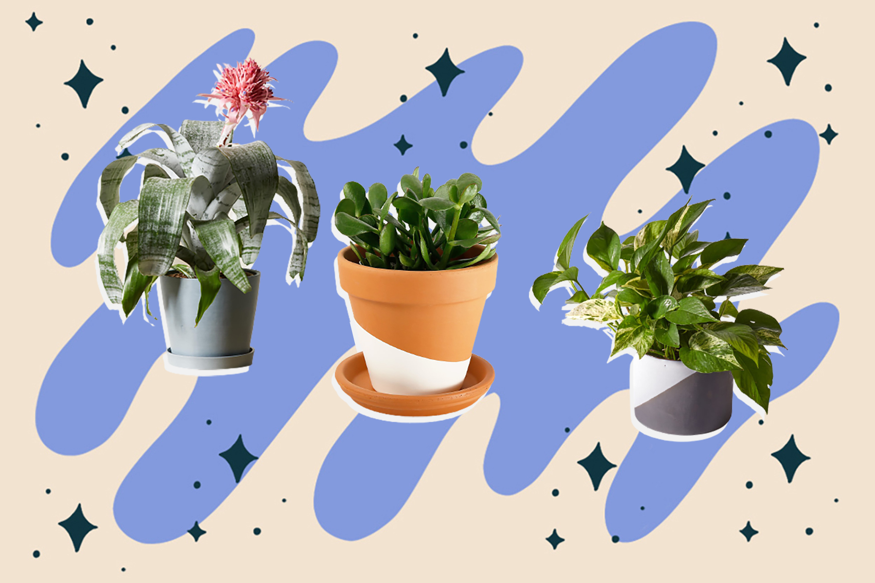 best houseplant for zodiac sign