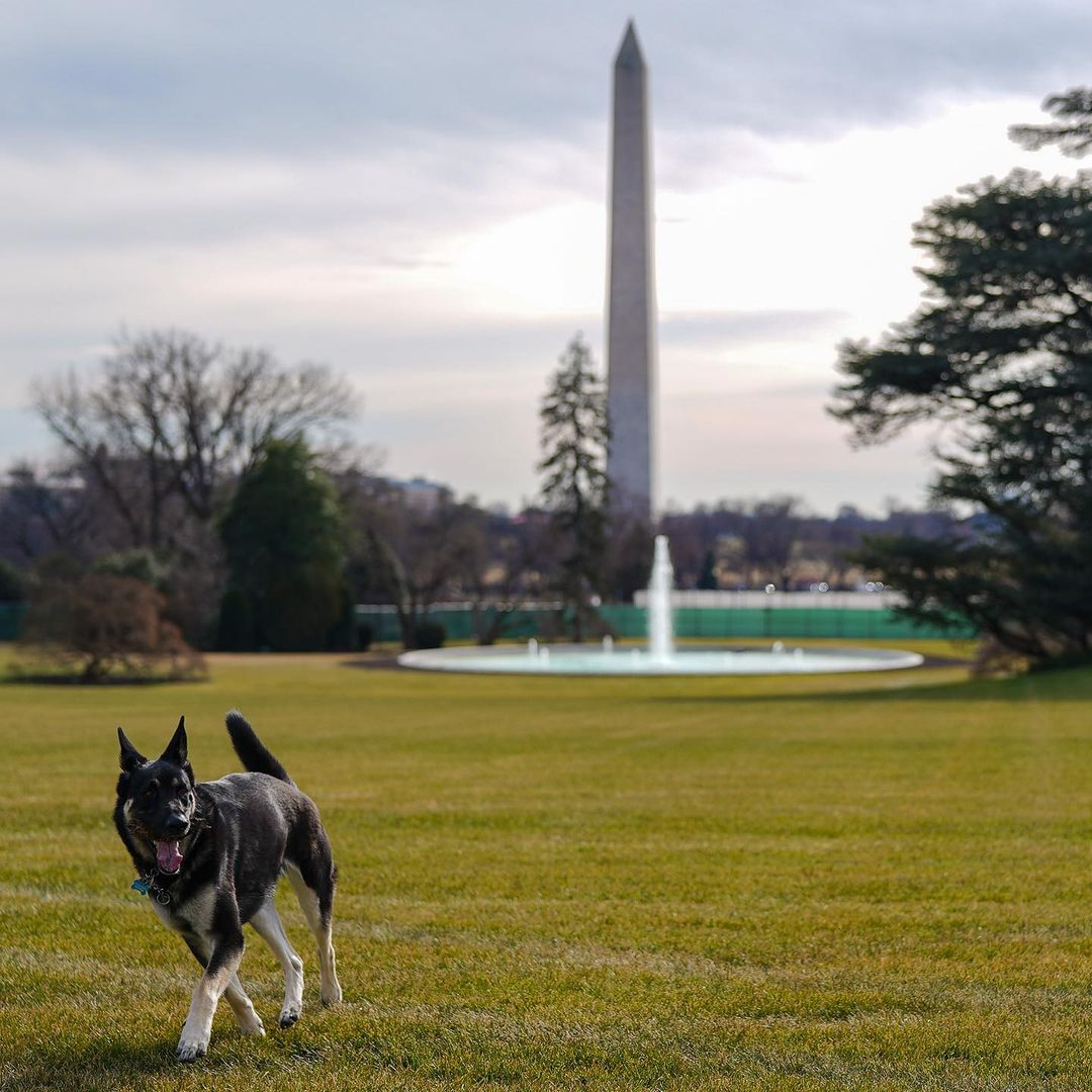 Biden dogs Champ and Major