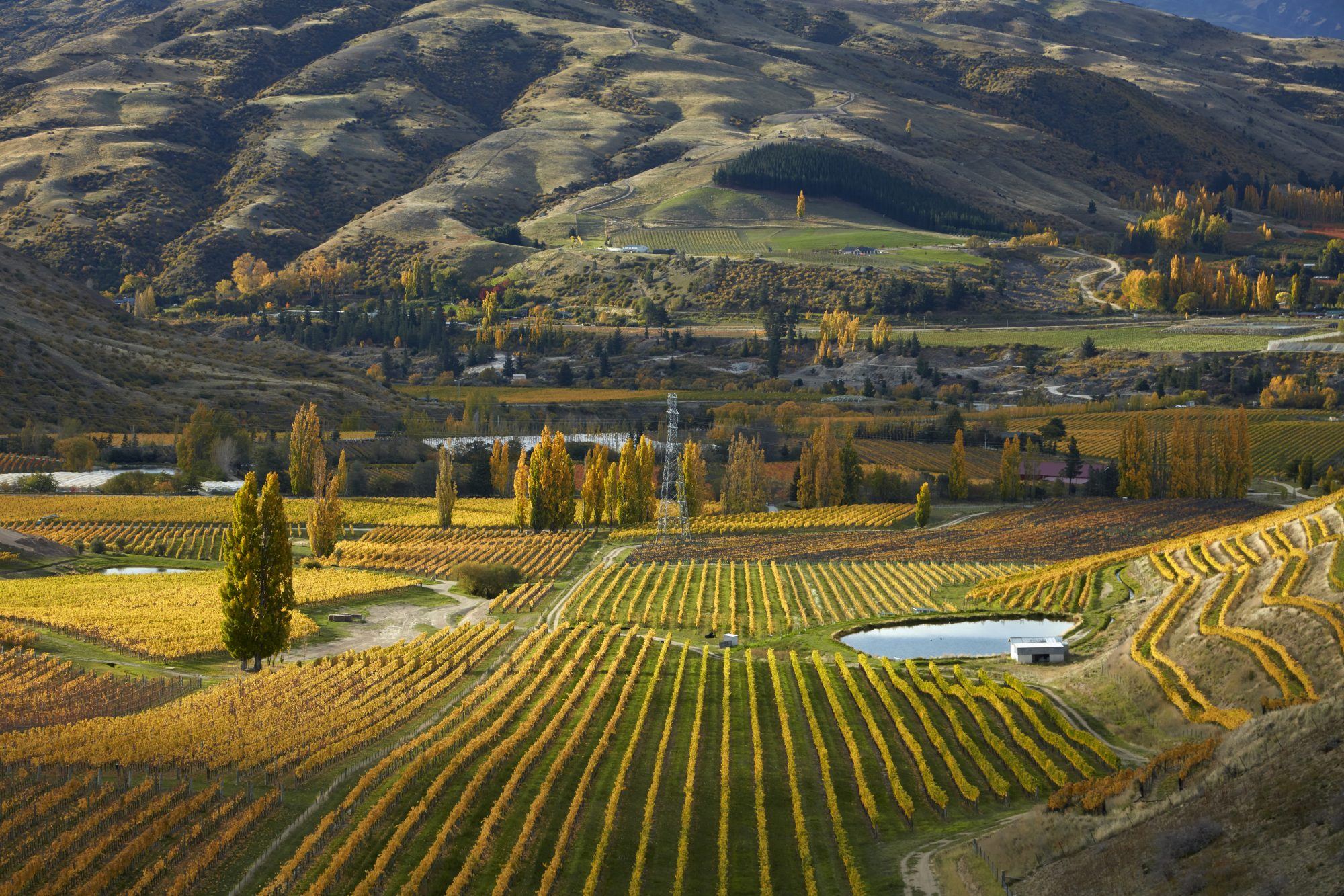 Autumn colors at Felton Road Vineyard near Cromwell, Bannockburn, Central Otago, South Island, New Zealand