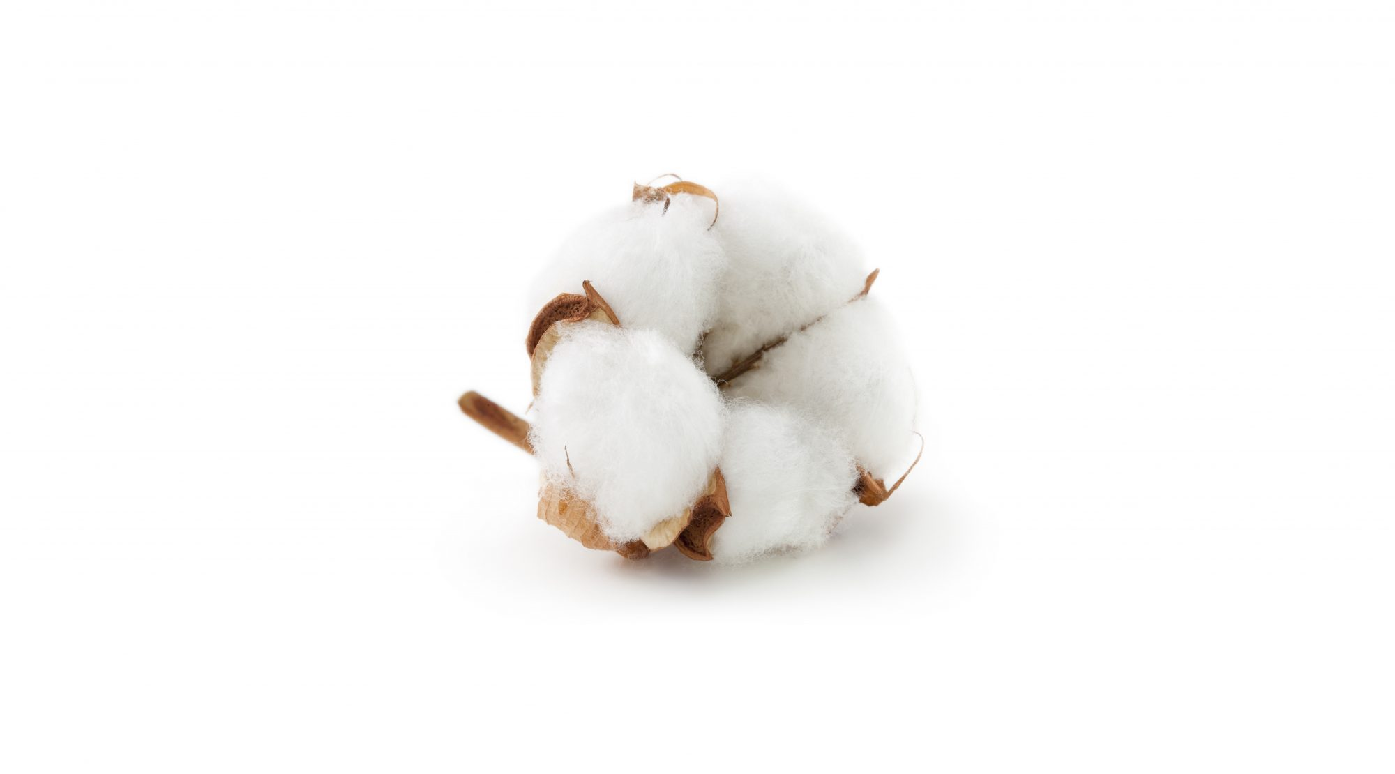 organic-tampons-your-flow-cotton
