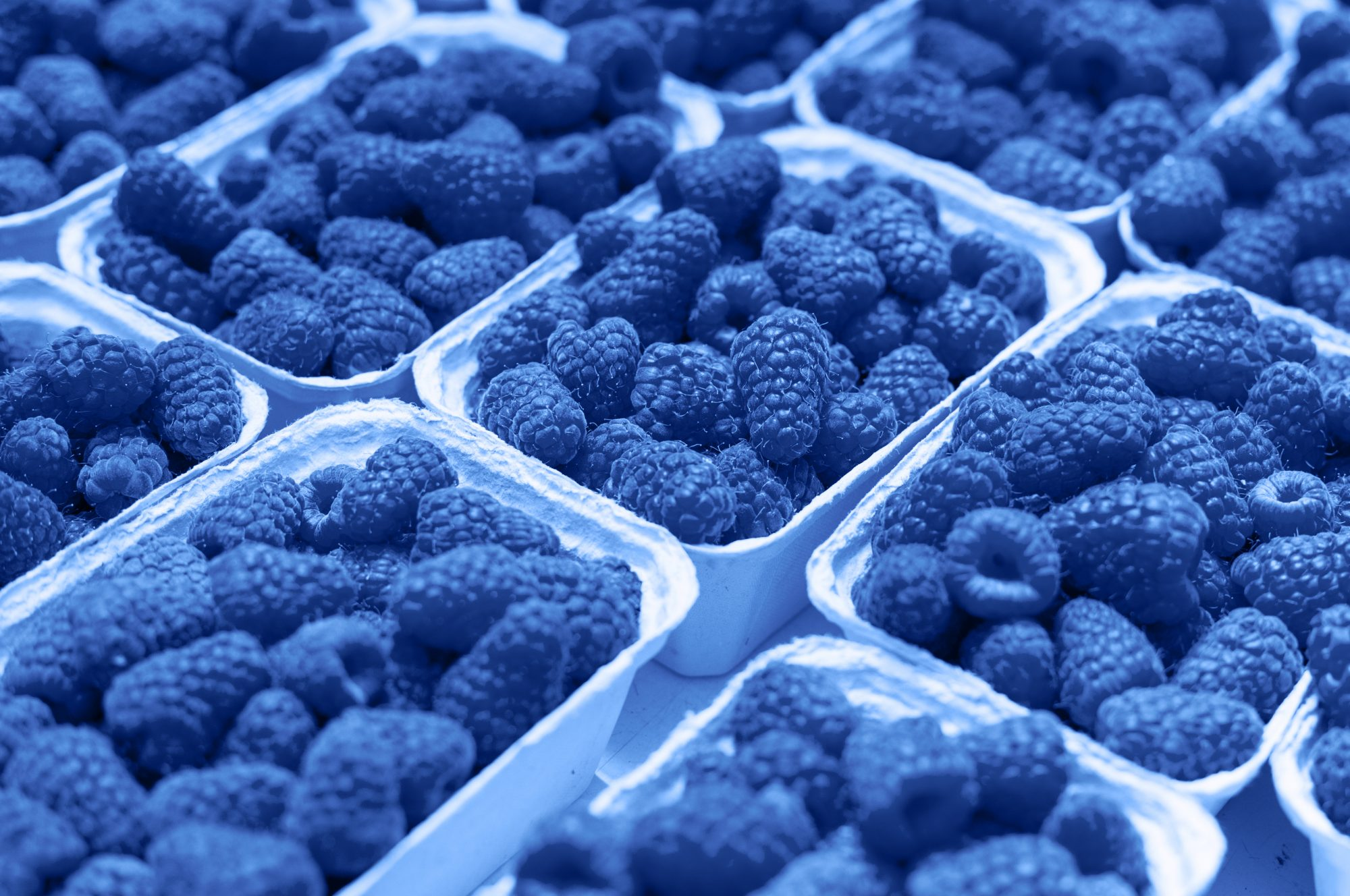 Fresh raspberry on a market in paper box containers. Photographed at an angle from above, image monochrome toned. Color of the year. Beautiful blue background for design.