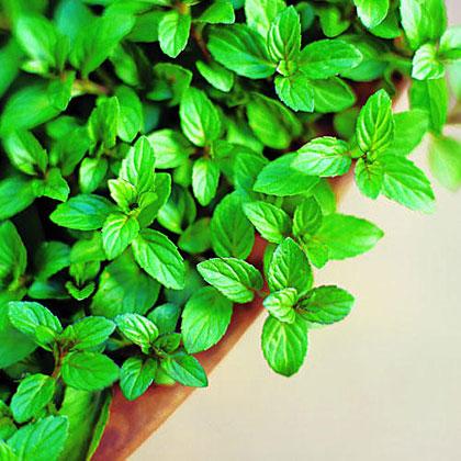 Homegrown Mint