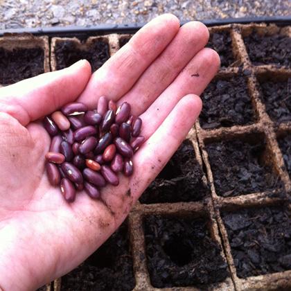seeds-in-hand.jpg