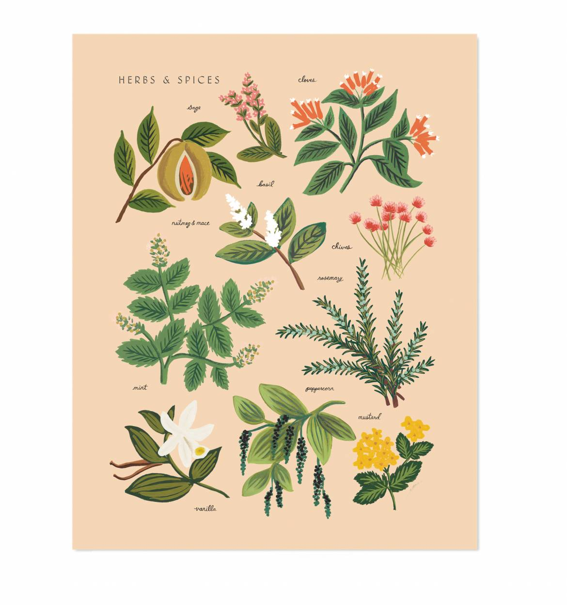 Herbs & Spices Peach Illustration