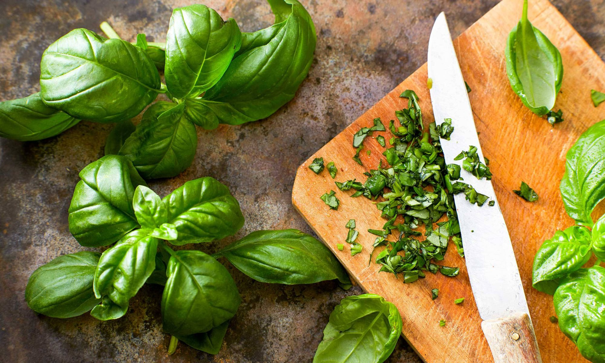 EC: How to Store Basil So It Stays Fresh