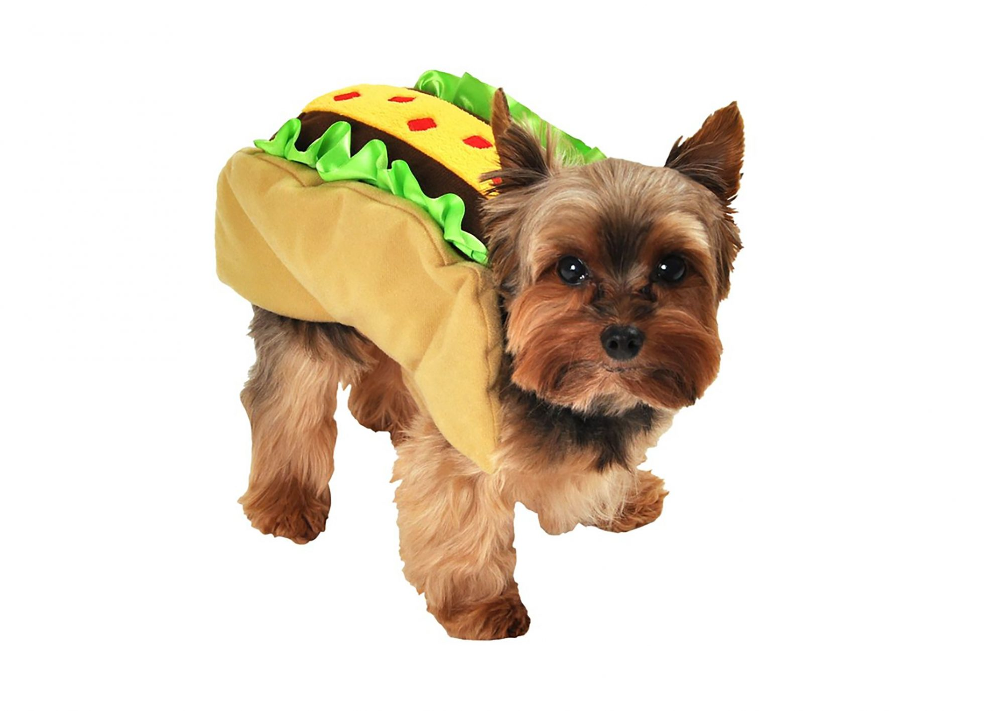 1709w-Taco-Costume-Dog.jpg