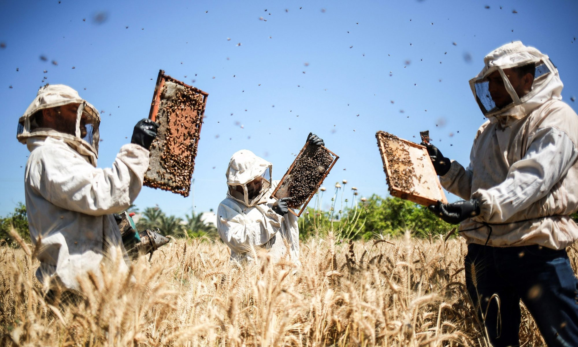EC: Beekeepers Are Fighting Over Expensive Manuka Honey