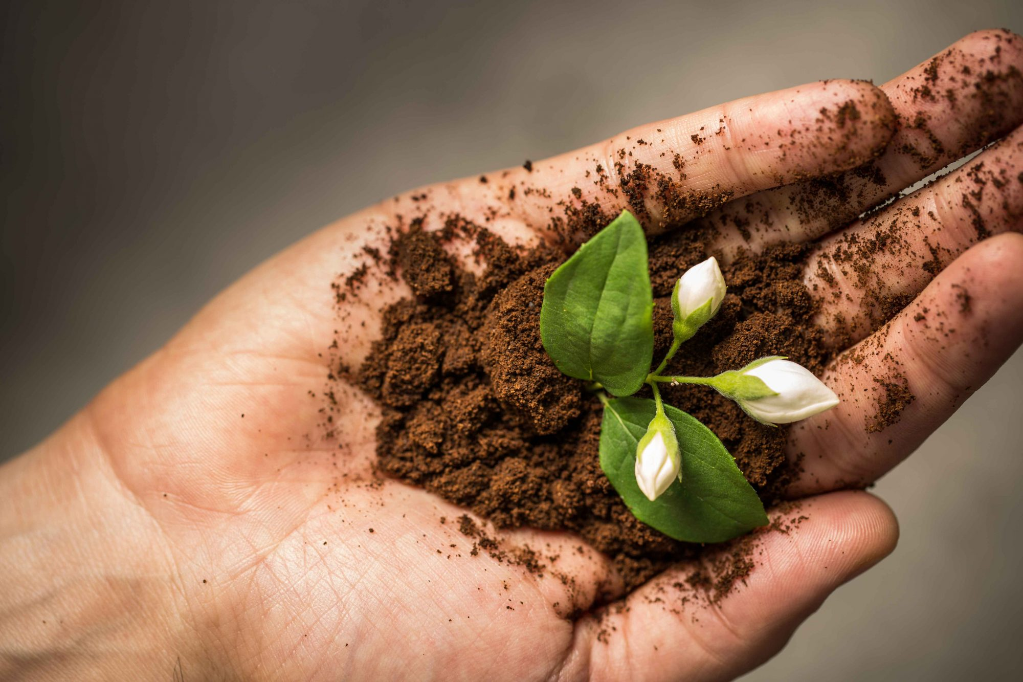 EC: Will Coffee Grounds Help Your Plants?
