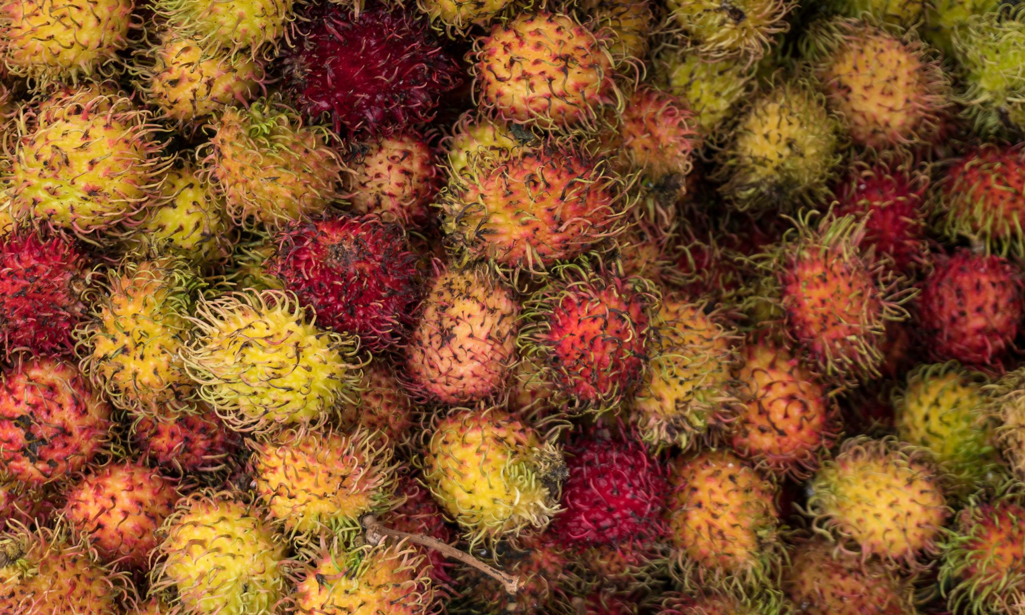 EC: Exotic Fruit Is All the Rage for Rosh Hashanah