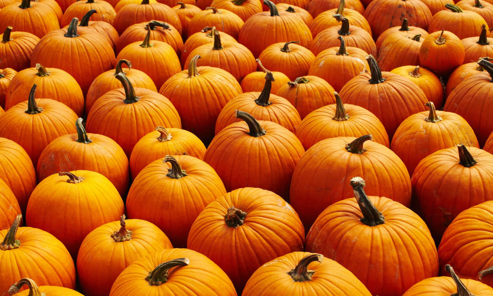 DIY Pumpkin Spice Body Scrub Will Have You Smelling Like Fall