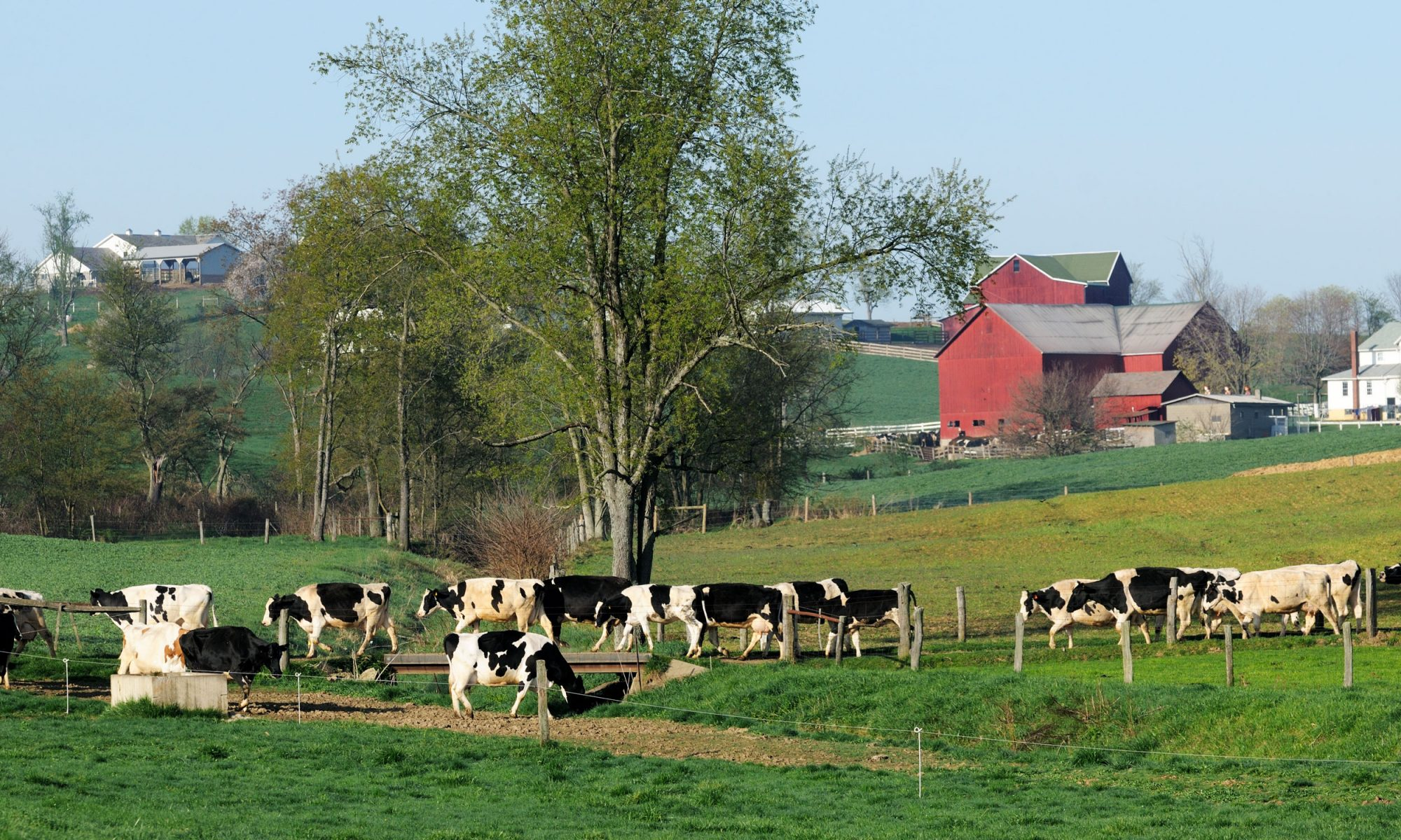 EC: How the Amish Do Breakfast