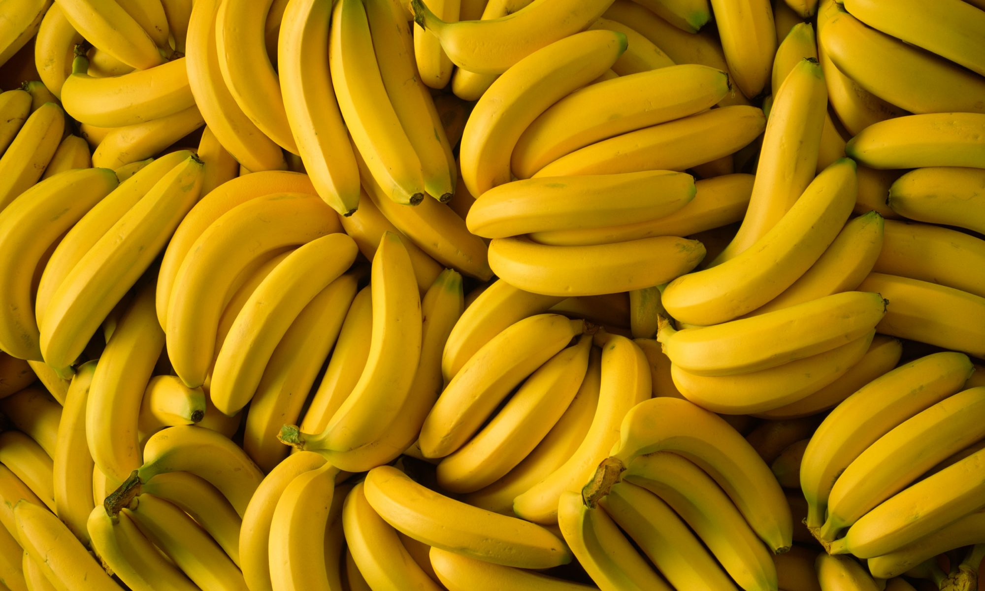 EC: Banana Extinction Is Possible, but Science Might Save Us