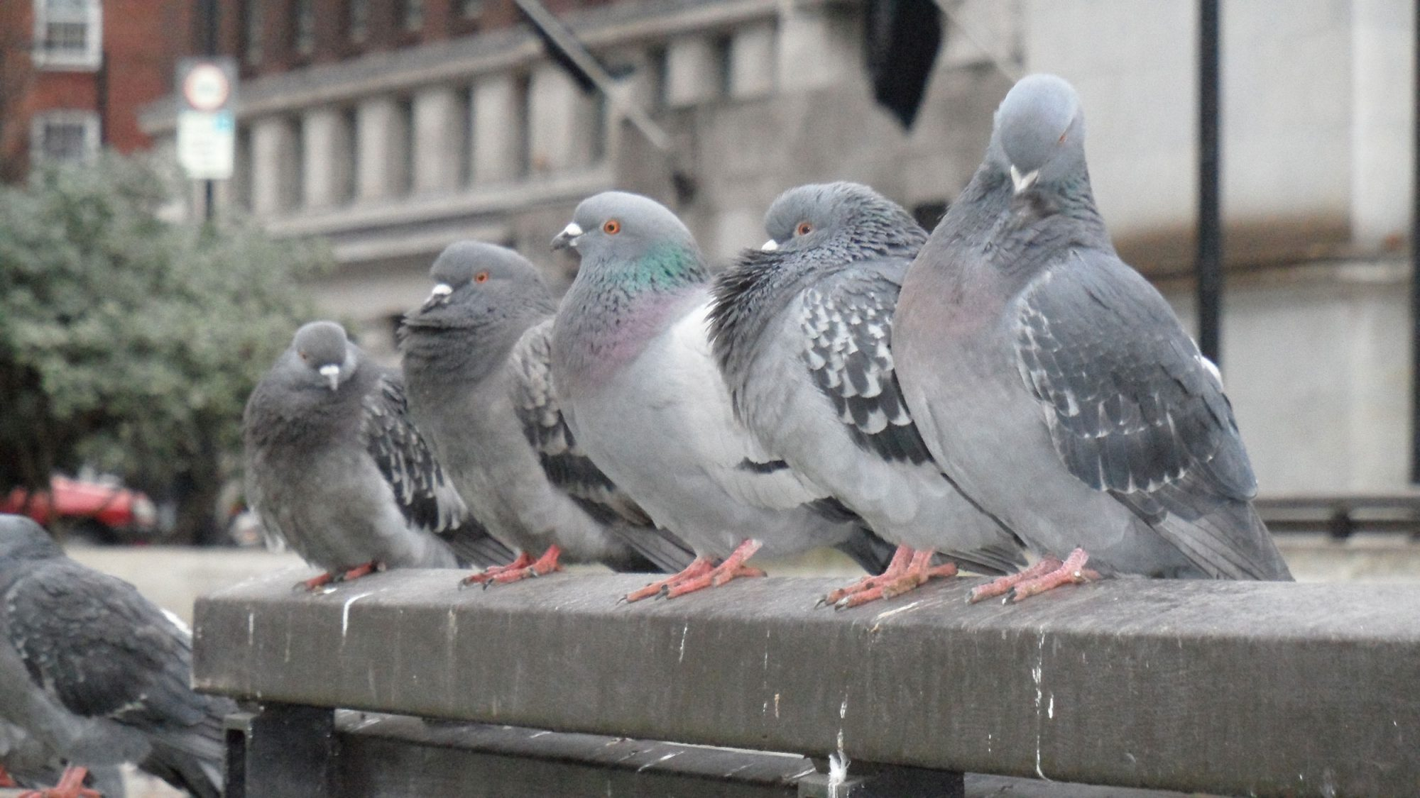 EC: Some Russian Bread Might Have Pigeon in It