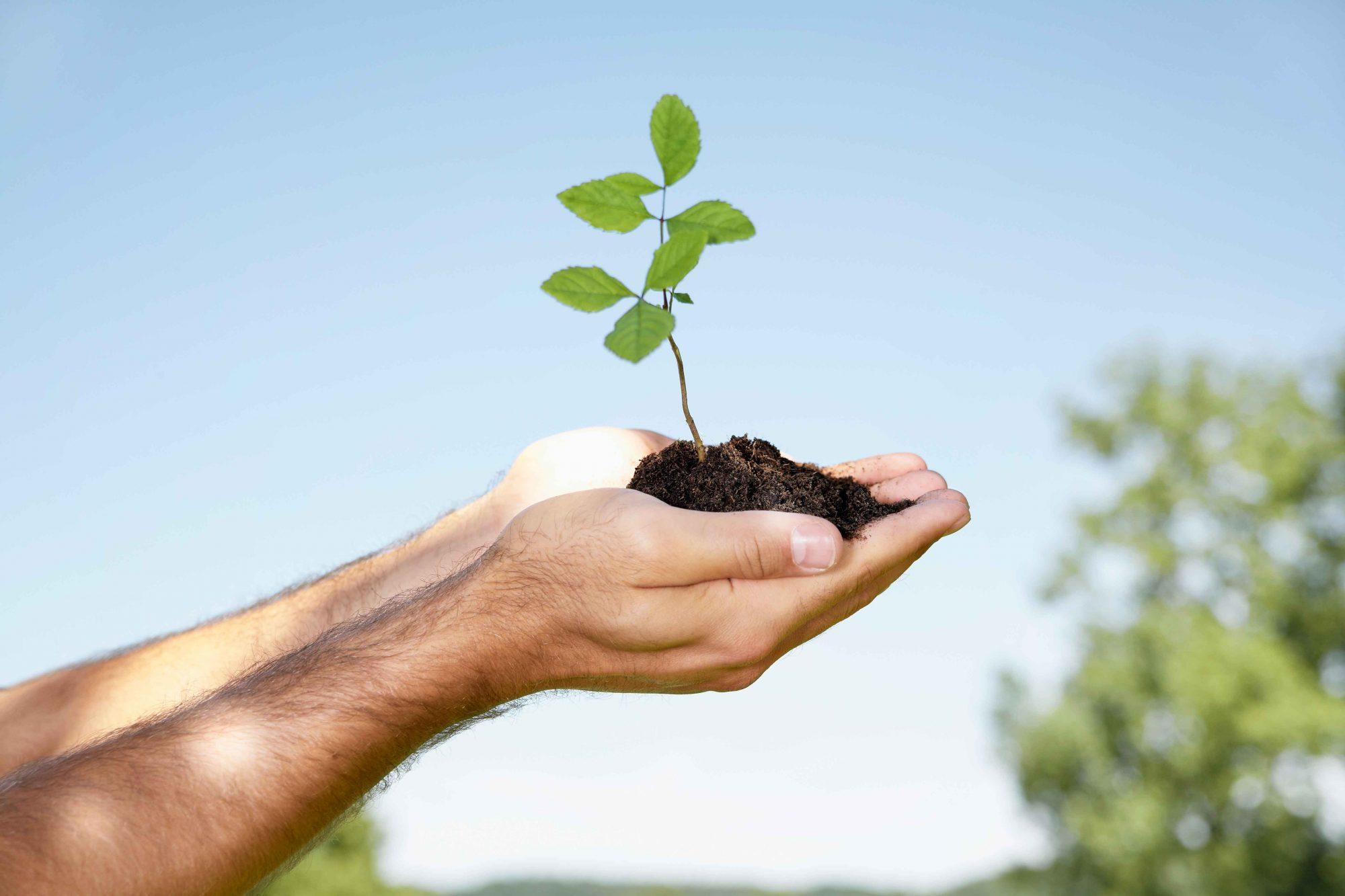 EC: How Your Caffeine Addiction Can Grow a Tree