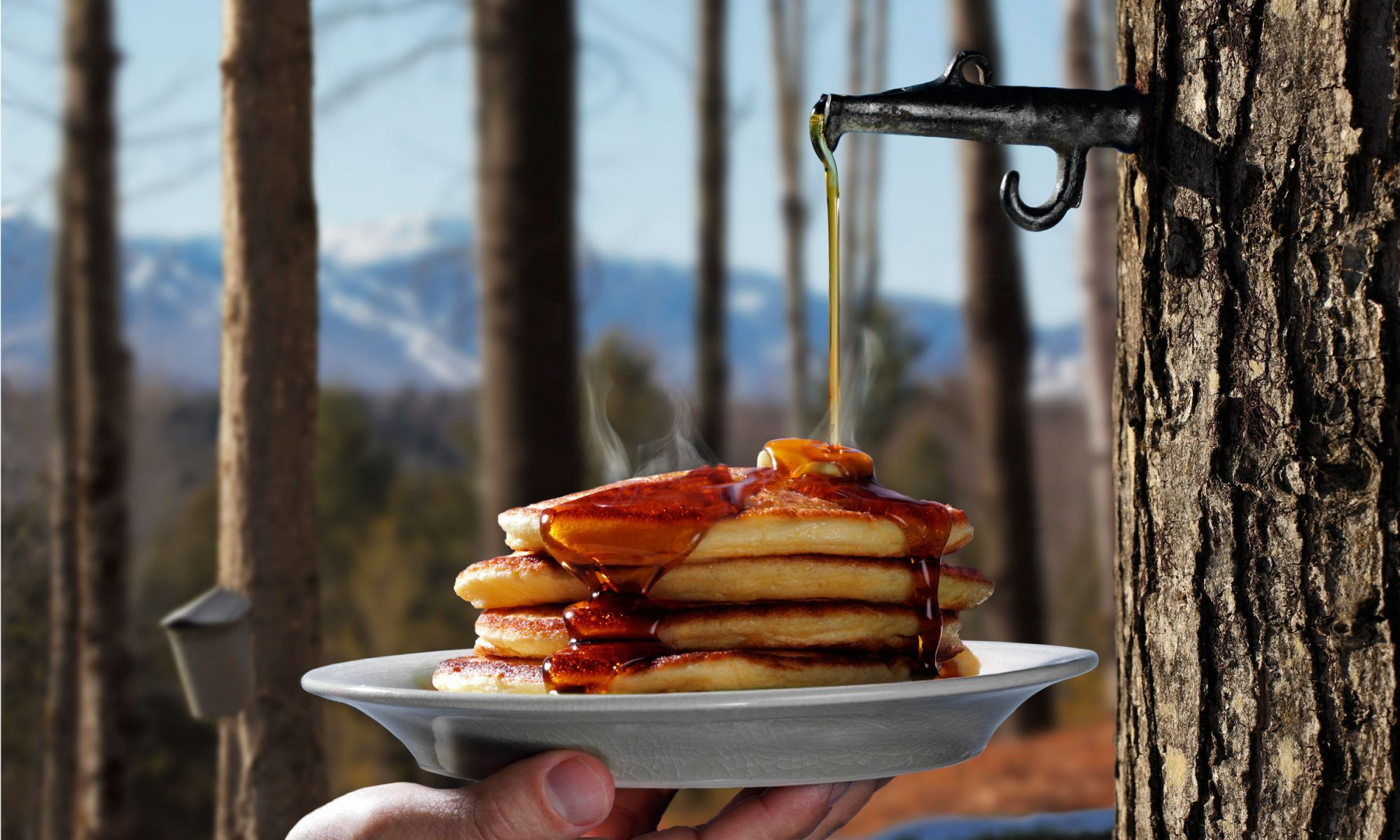 EC: The Science Behind Maple Syrup