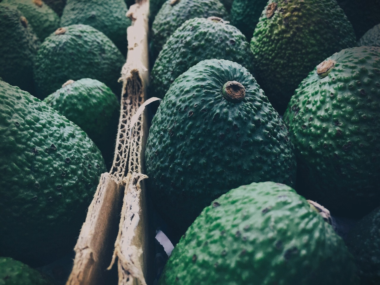 A cartel in Mexico is shaking down avocado producers