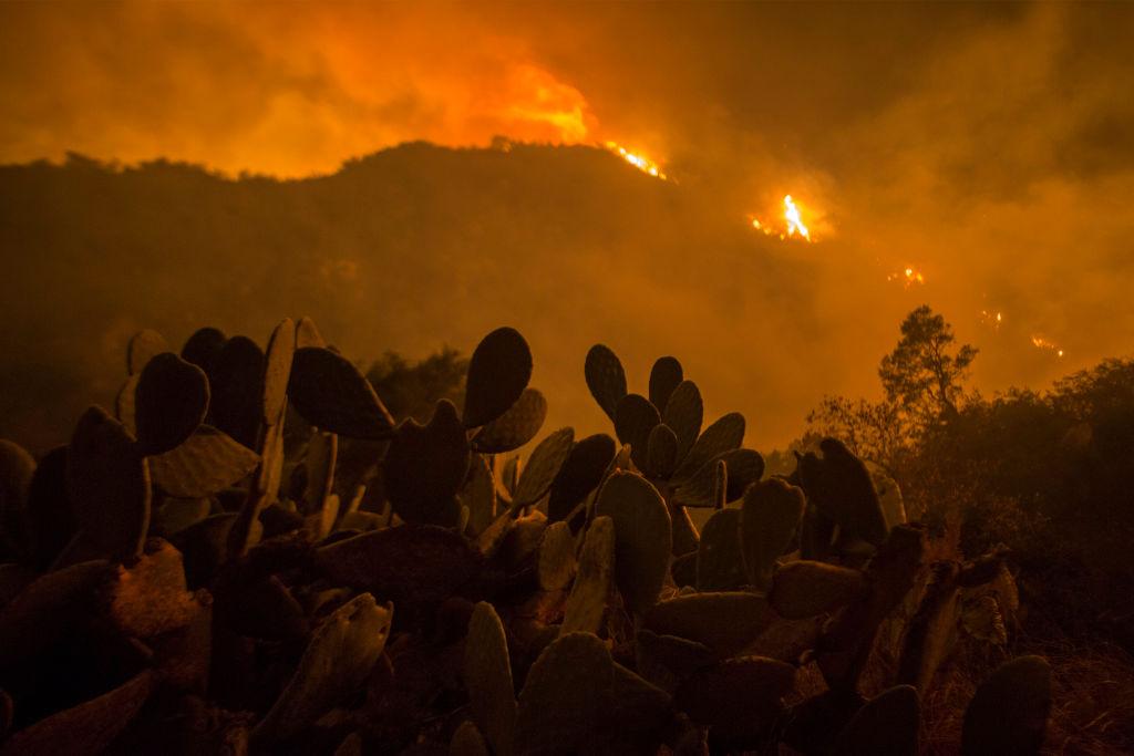 Massive Thomas Fire Threatens Avocado Farms