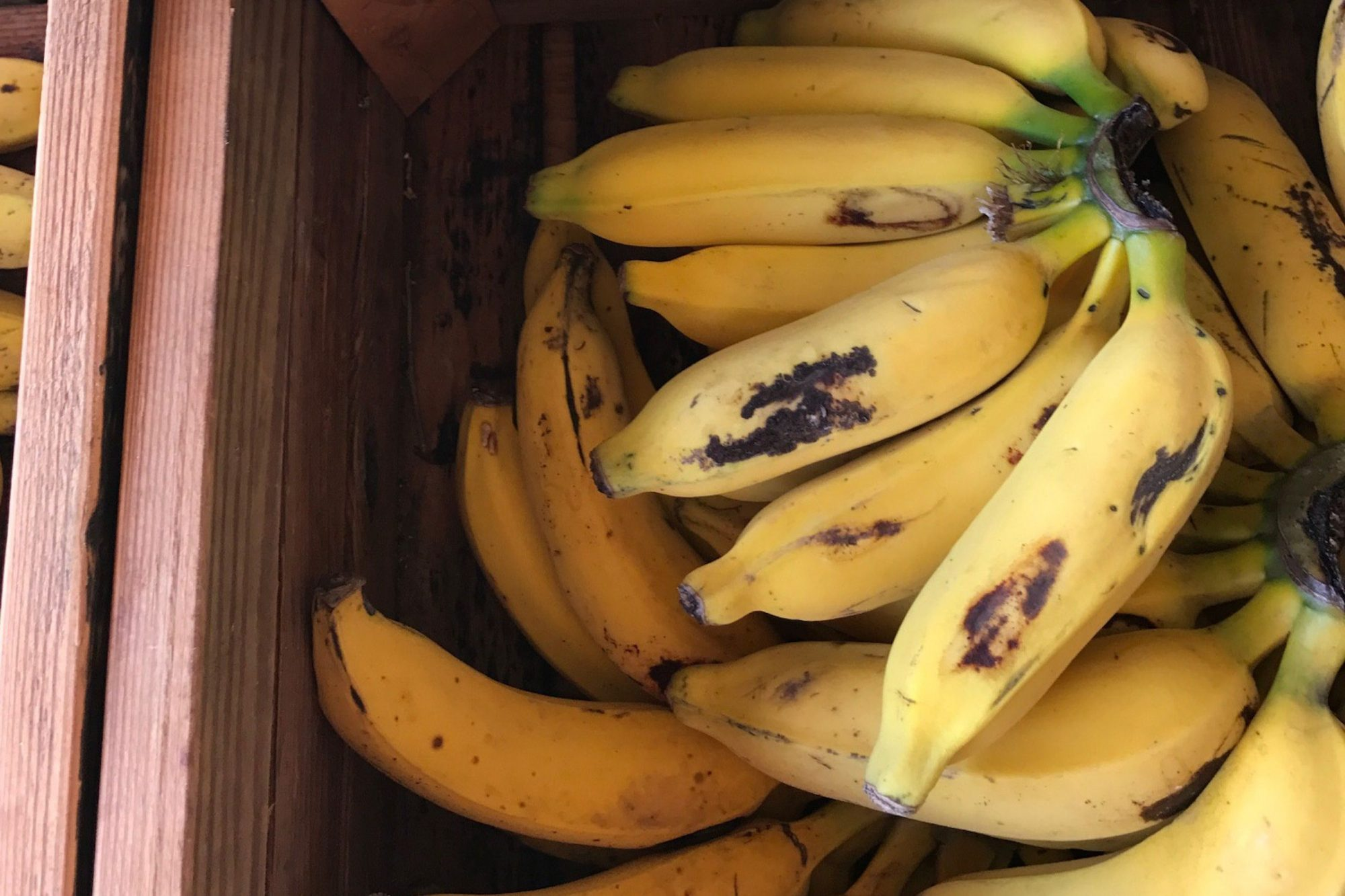 EC: Apple Bananas Will Change the Way You Think About Bananas
