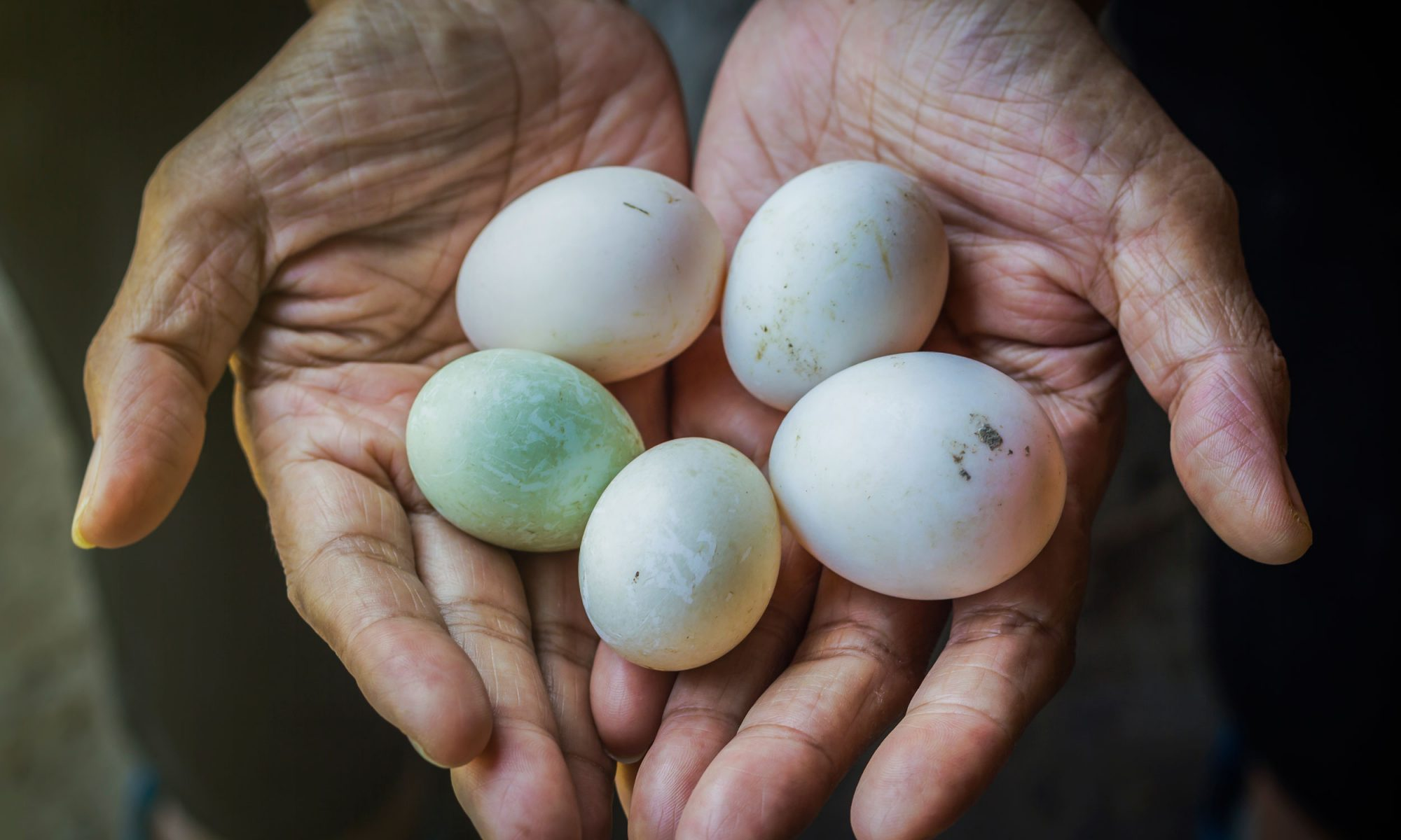 EC:  message-editor%2F1503069339483-hands-holding-duck-eggs