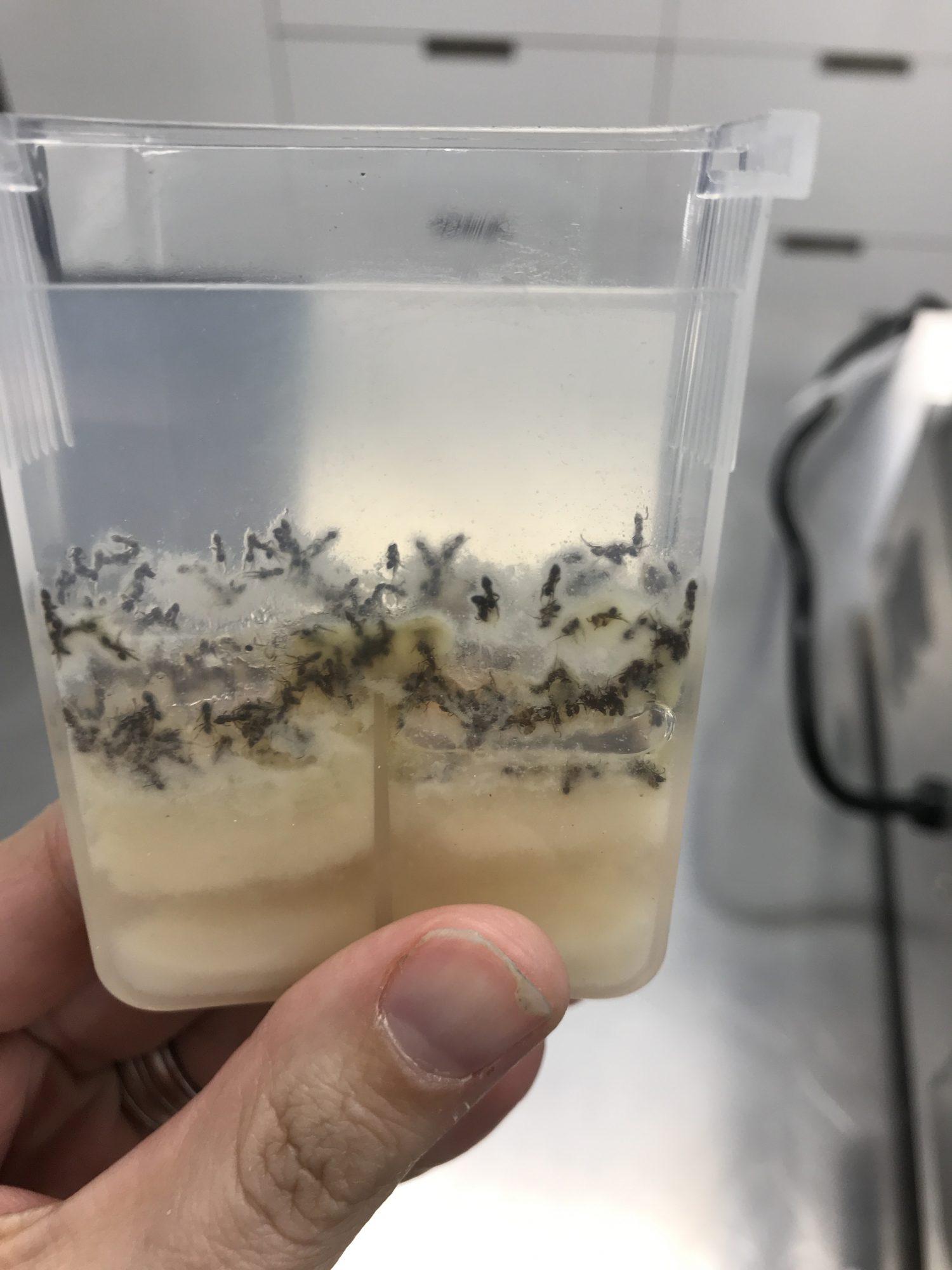 maggots-instant-pot-image