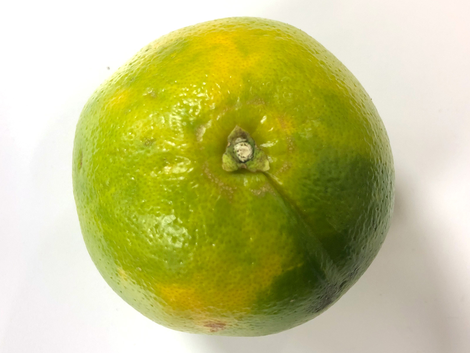 mandelo-cocktail-grapefruit.jpg