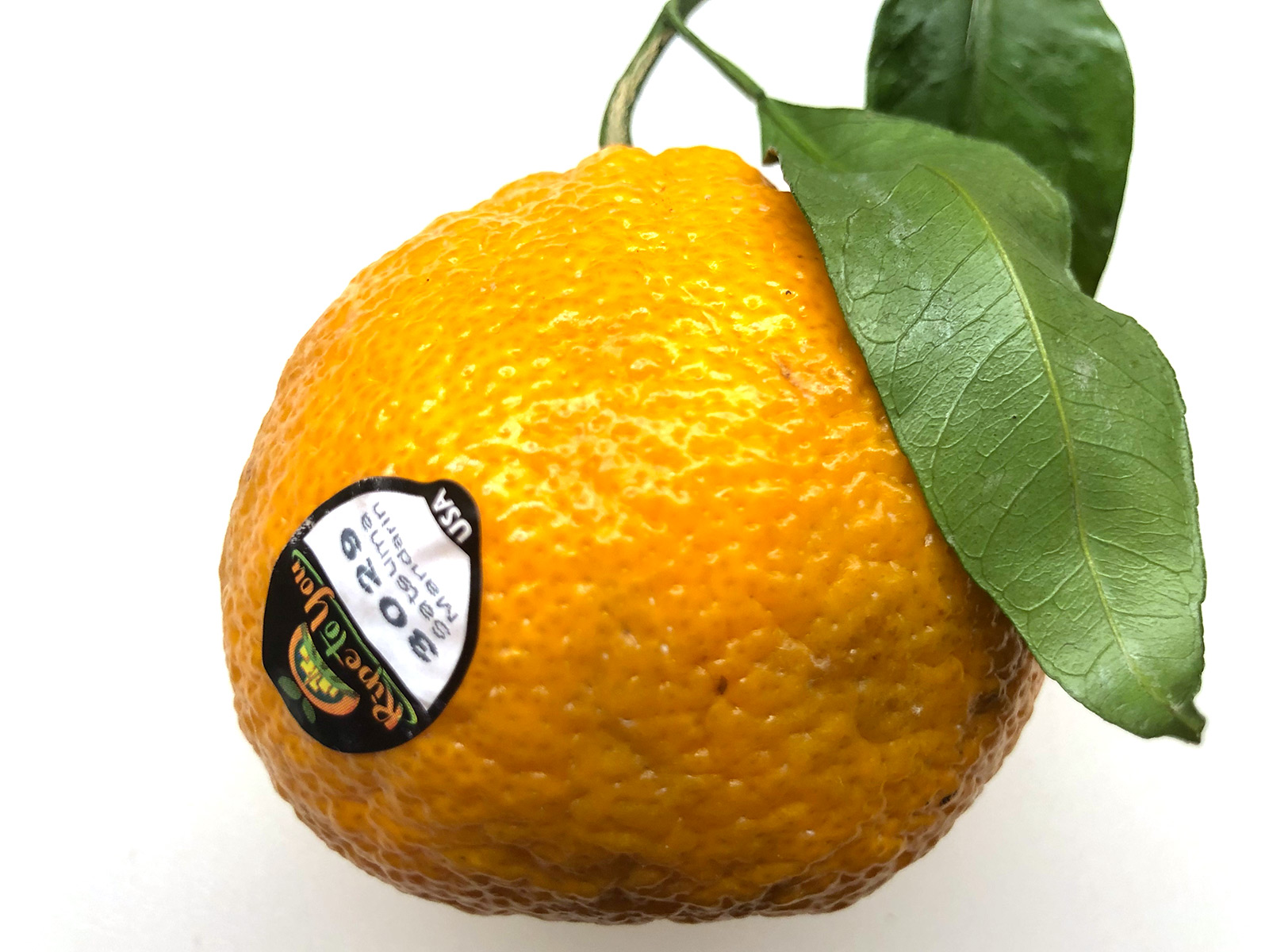 3029-satsuma-ripe-to-you.jpg