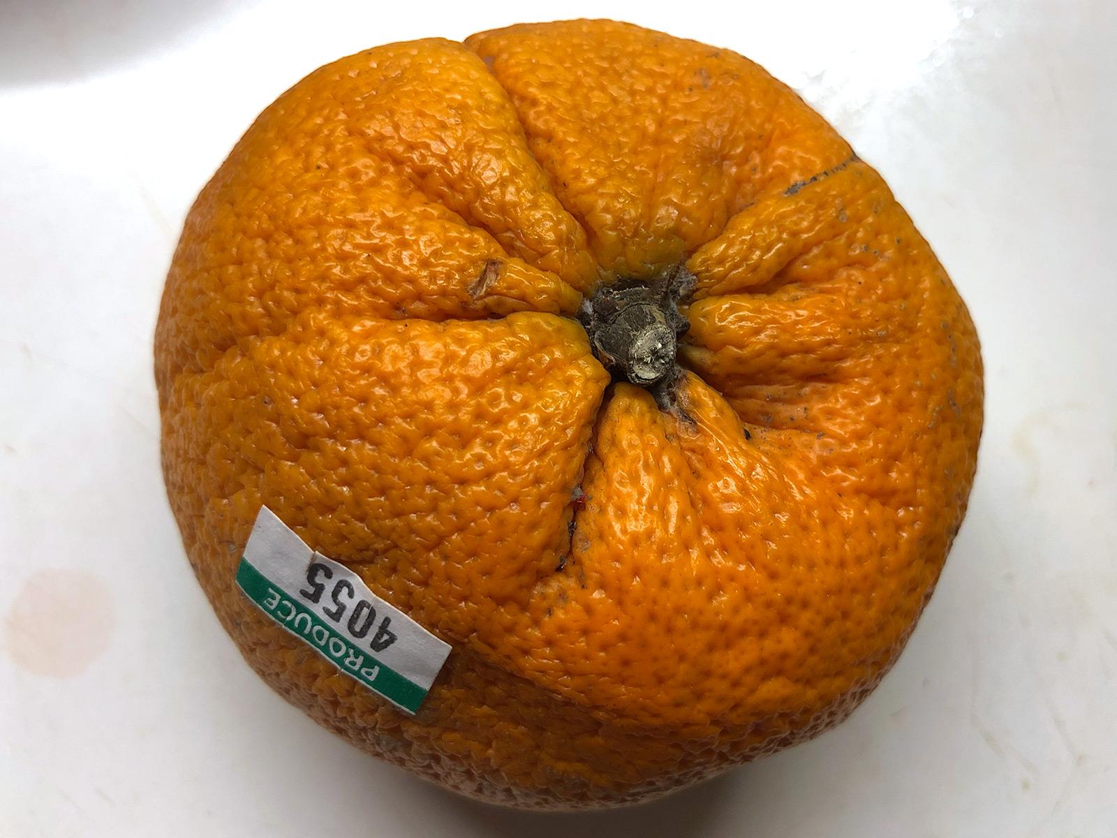 4055-random-tangerine.jpg