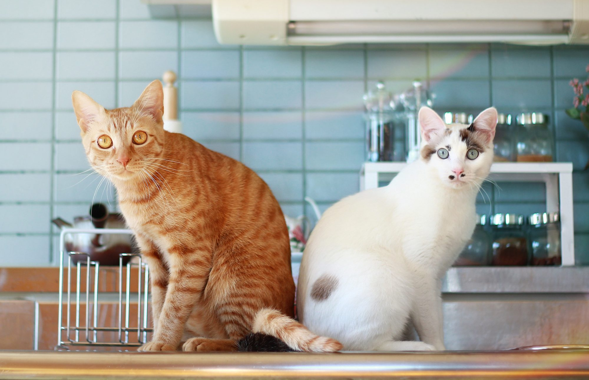Cats in the Kitchen Getty 10/29/19