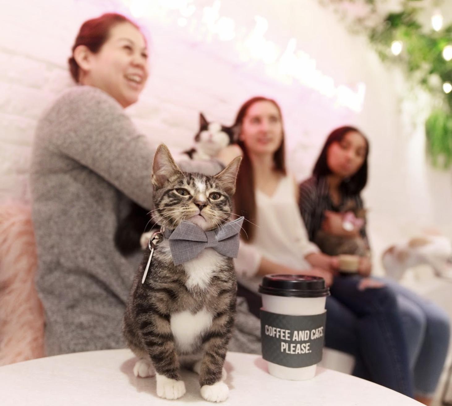 kitten lounge 4