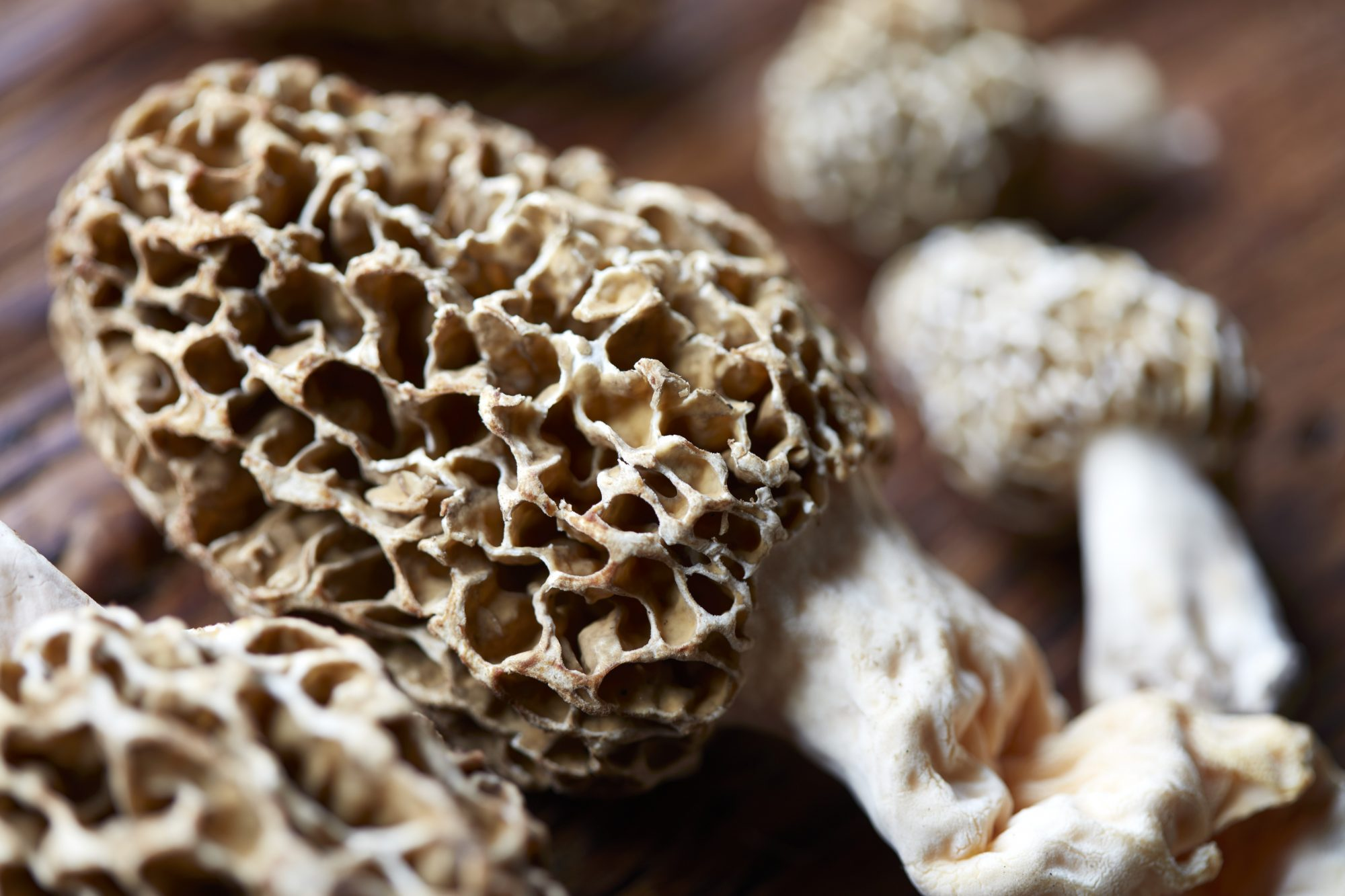 gettymorel043019.jpg