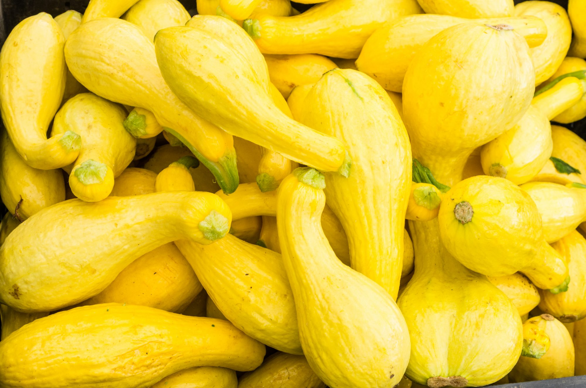 gettyyellowsquash.jpg