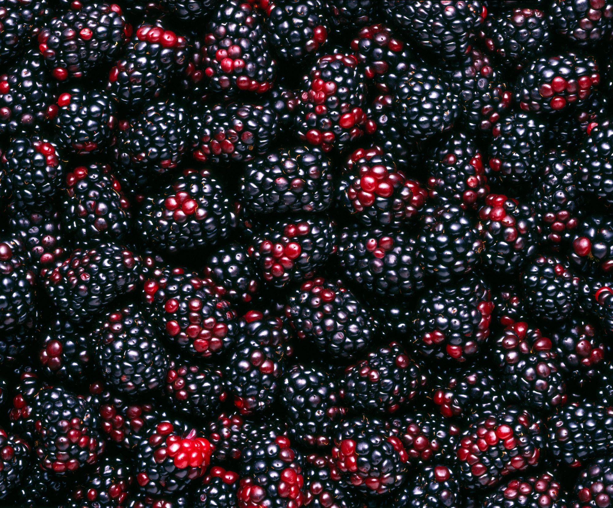gettyboysenberries.jpg