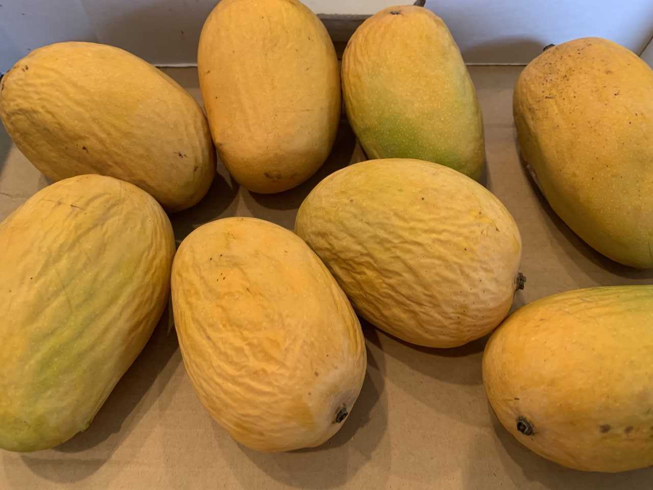 stacey mangoes