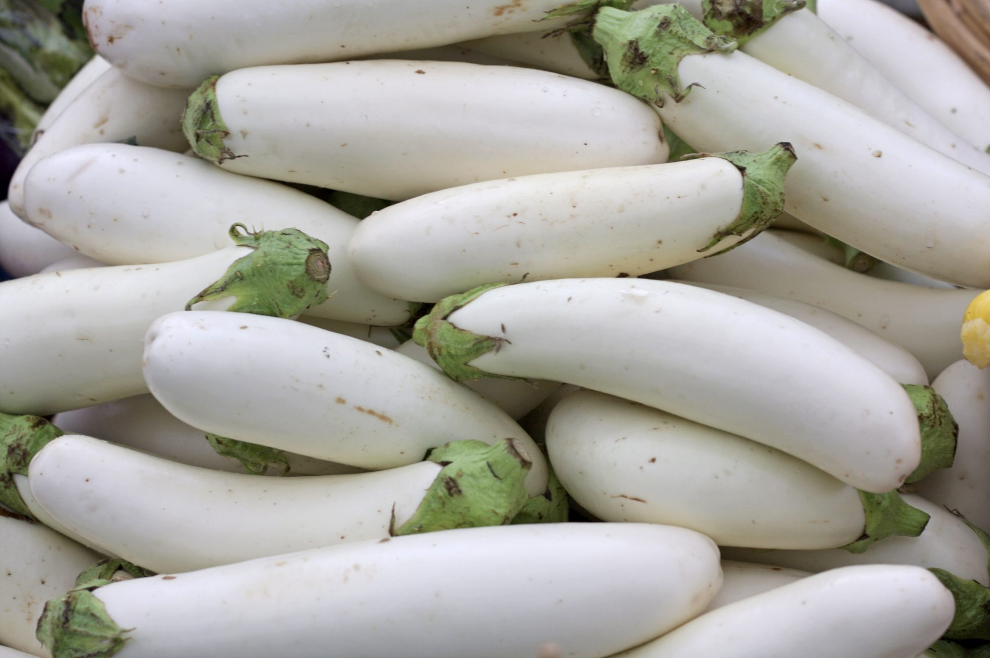 whiteeggplant071519.jpg