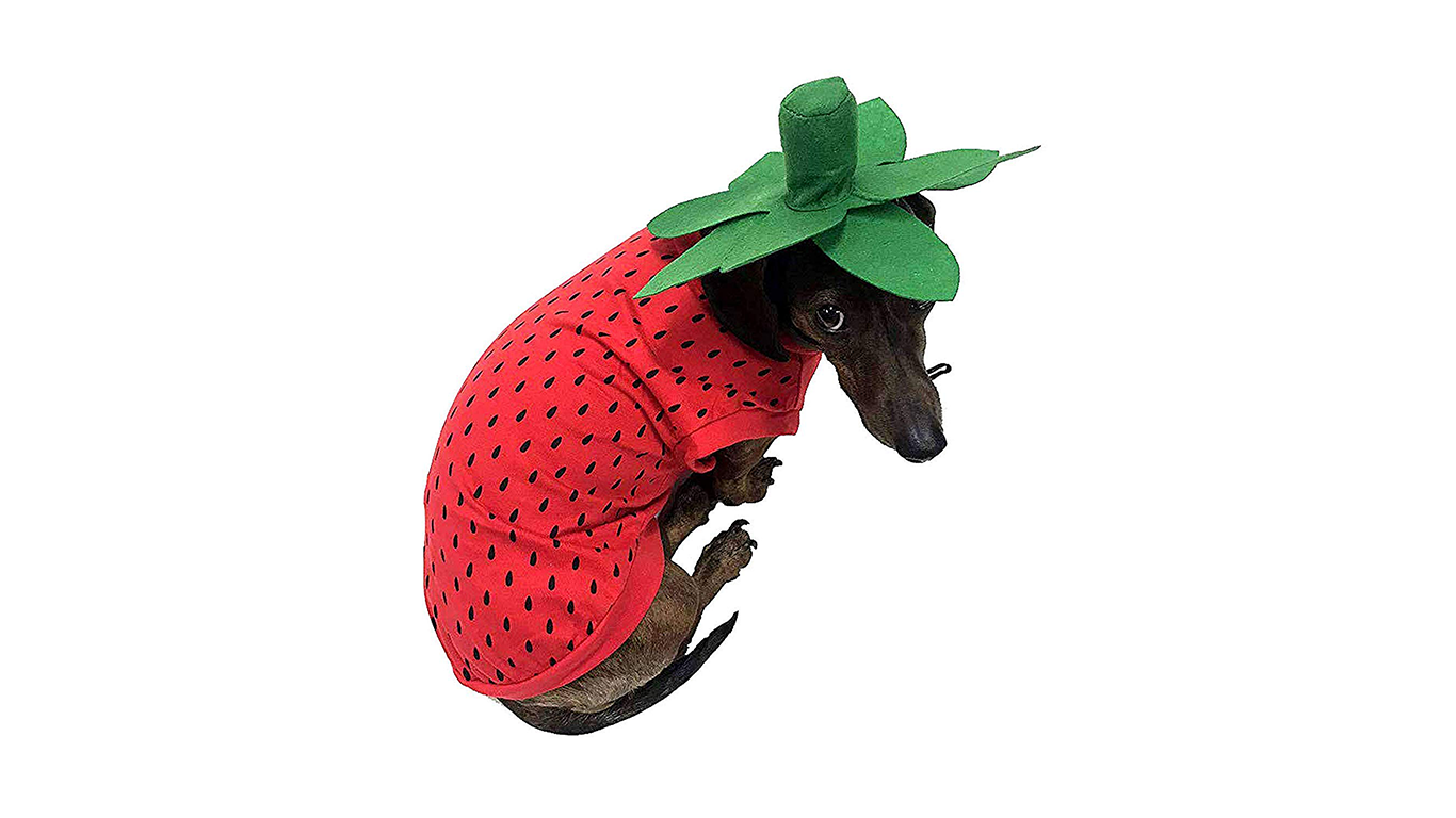 pet-strawberry