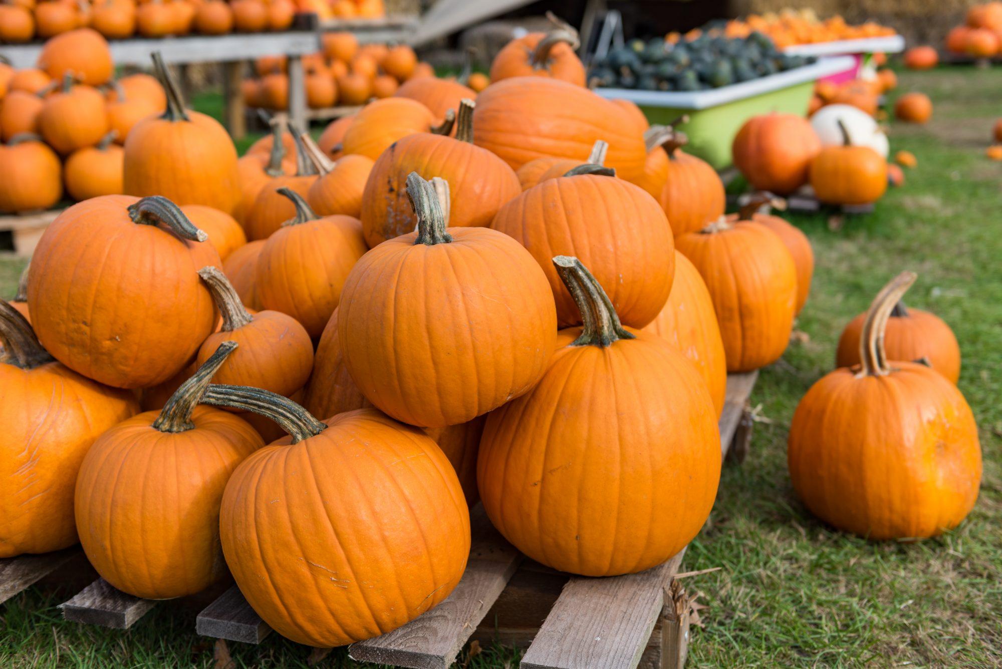 10232019_Getty Pumpkins Image