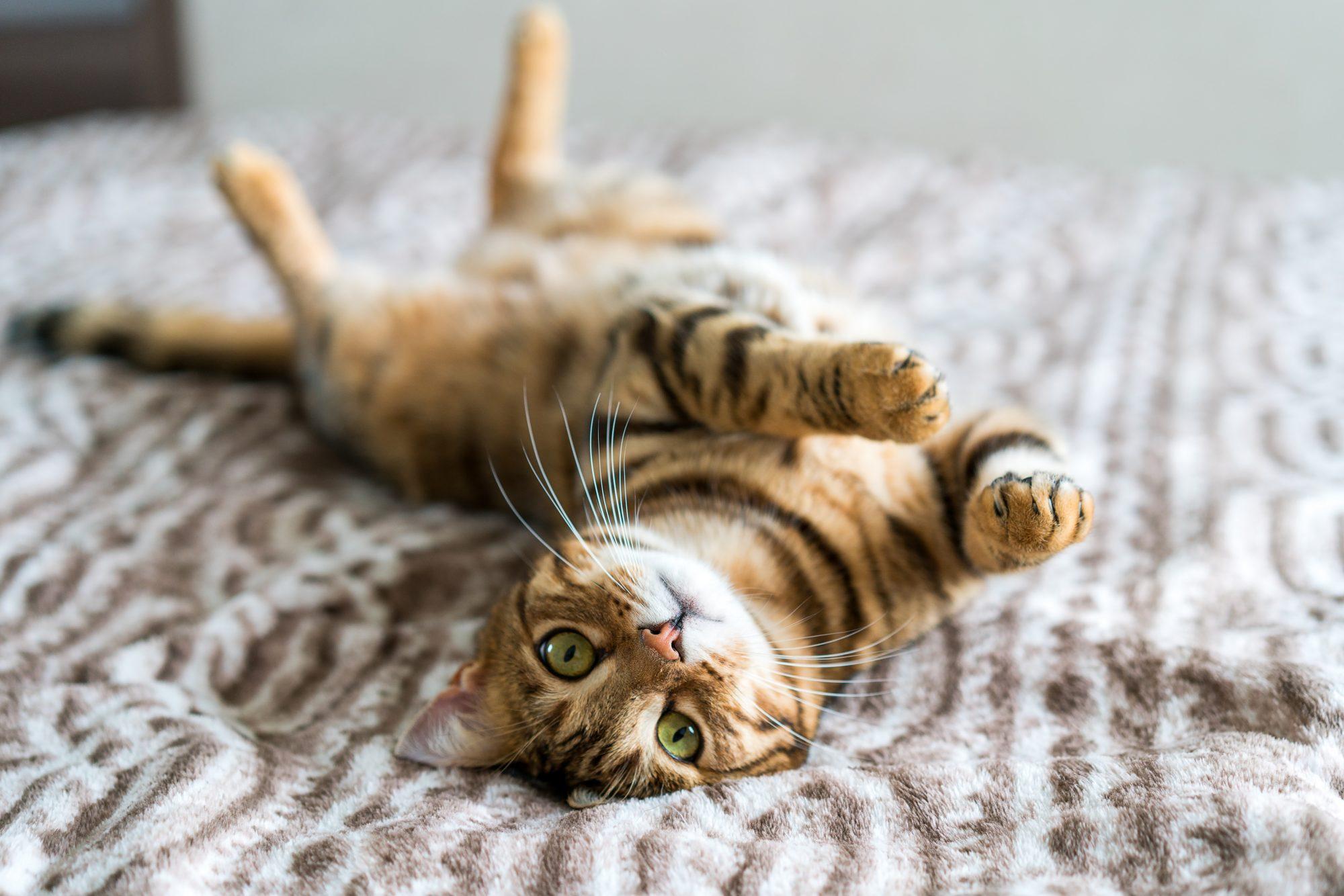 Cat in catnip Getty 2/3/20