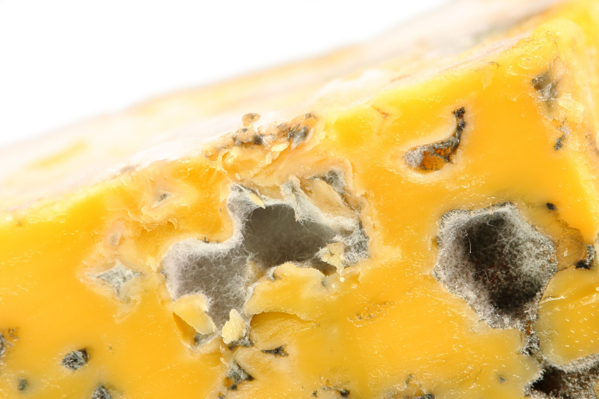 Moldy Cheese Getty 2/18/20